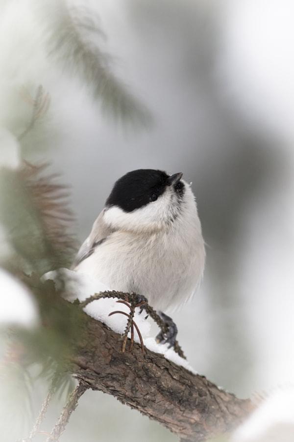 小鳥 by Kousuke Toyose on 500px.com