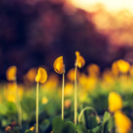 Tiny Yellows