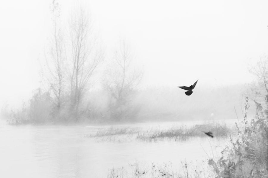 Foggy flights by Ana V. on 500px.com