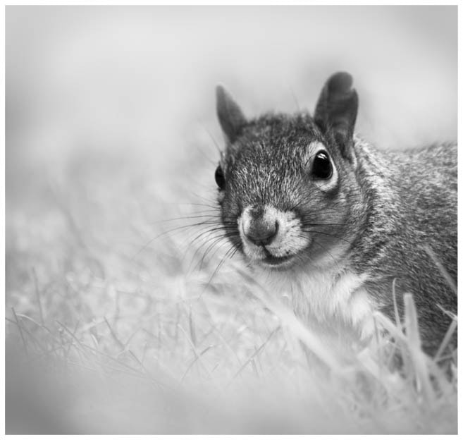 Photograph Curious Squirrel by Kelly-Marie Smith on 500px