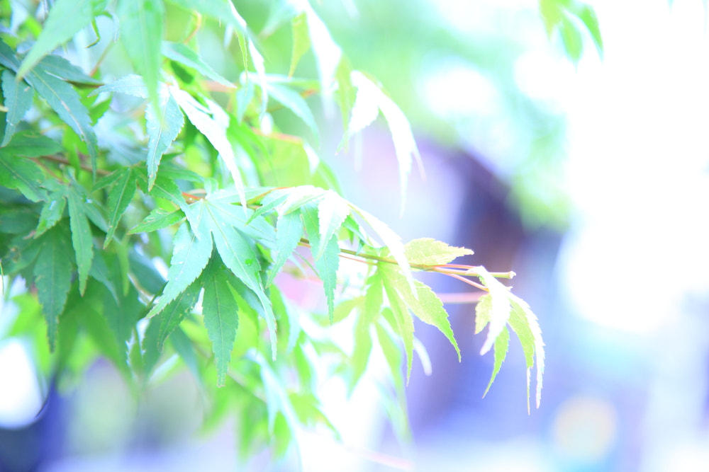 Photograph green maple ver. High key by kosuke fujimura on 500px