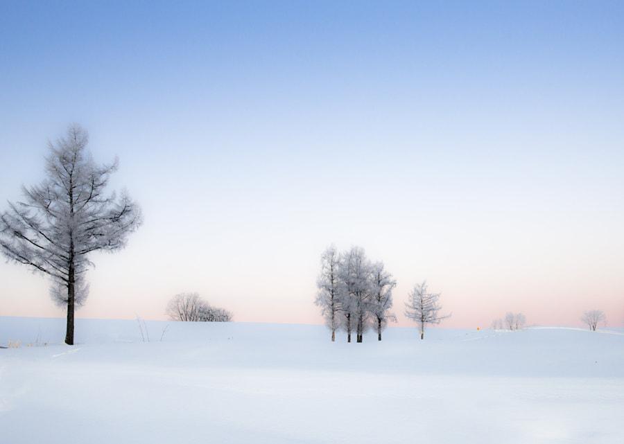 trees by Kousuke Toyose on 500px.com