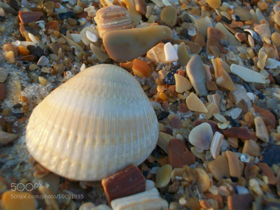 Photograph Hatteras Shell by Susan Troyer-Hogge on 500px