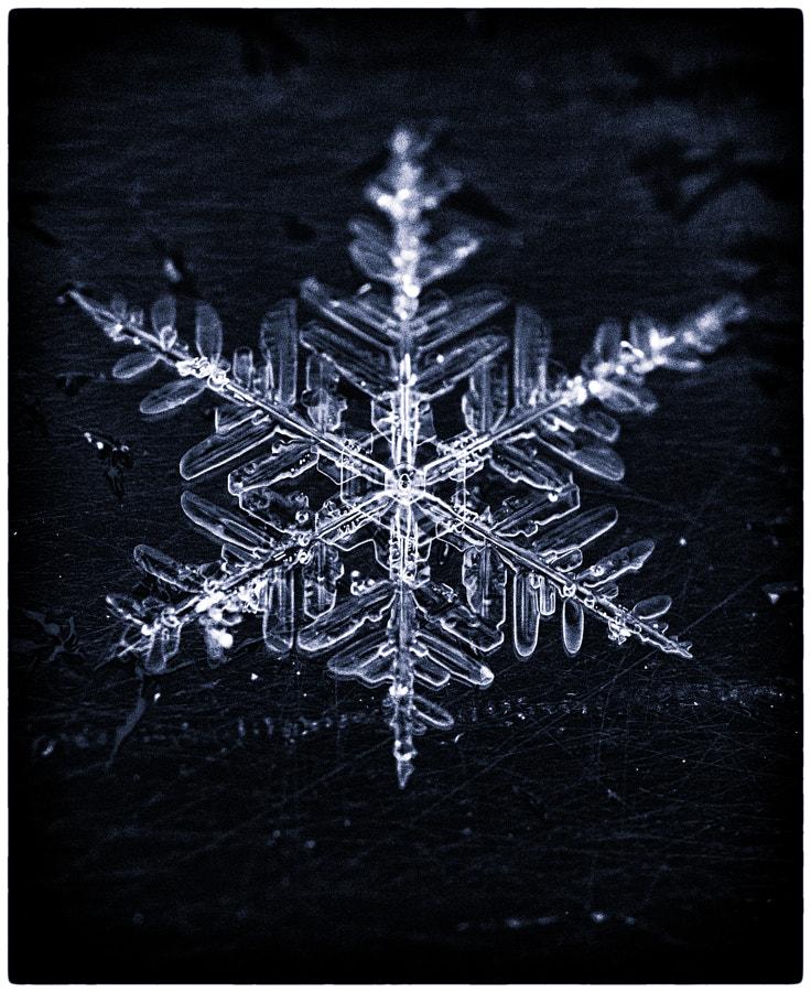 雪の結晶 by Kousuke Toyose on 500px.com