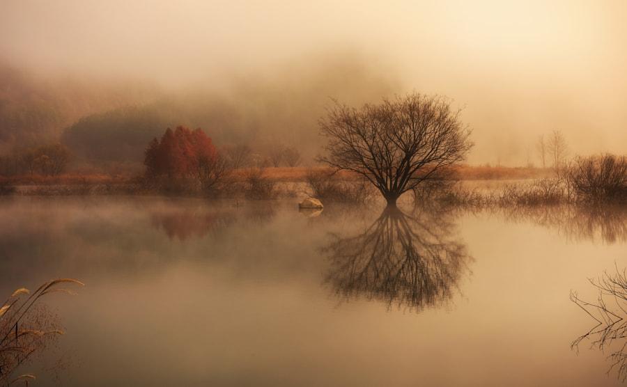 Foggy Morning by Jaewoon U on 500px.com