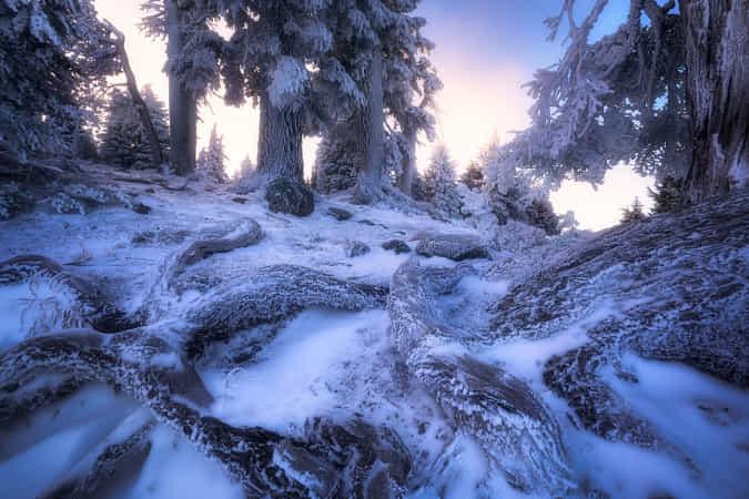 Frozen Forest by Daniel Fleischhacker