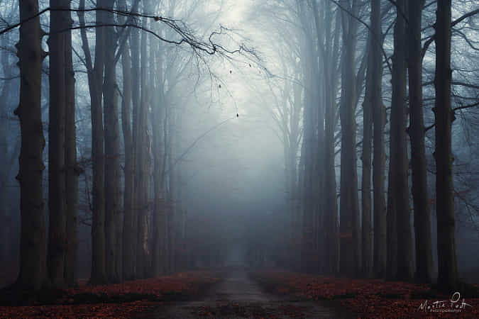 Light from above by Martin Podt