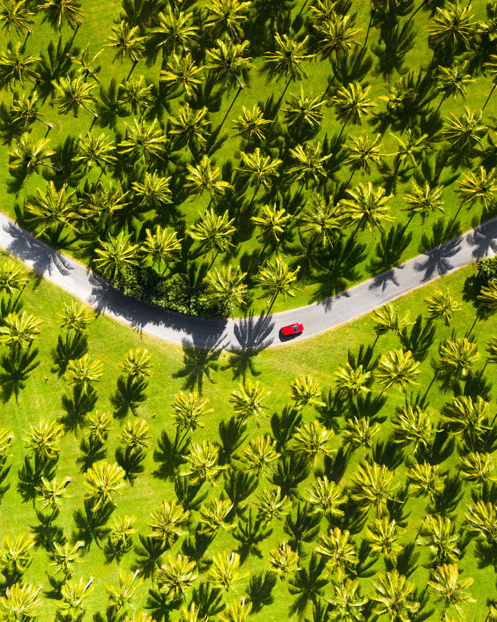 Road trip through a coconut paradise by florentrols on 500px.com