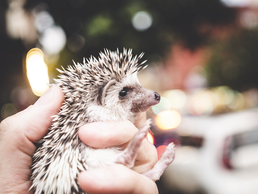 Cute and prickly. by Pablo Reinsch on 500px.com