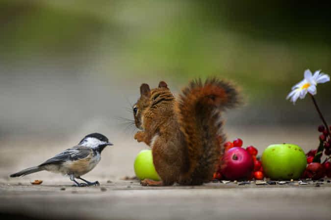 You look fine by Andre Villeneuve