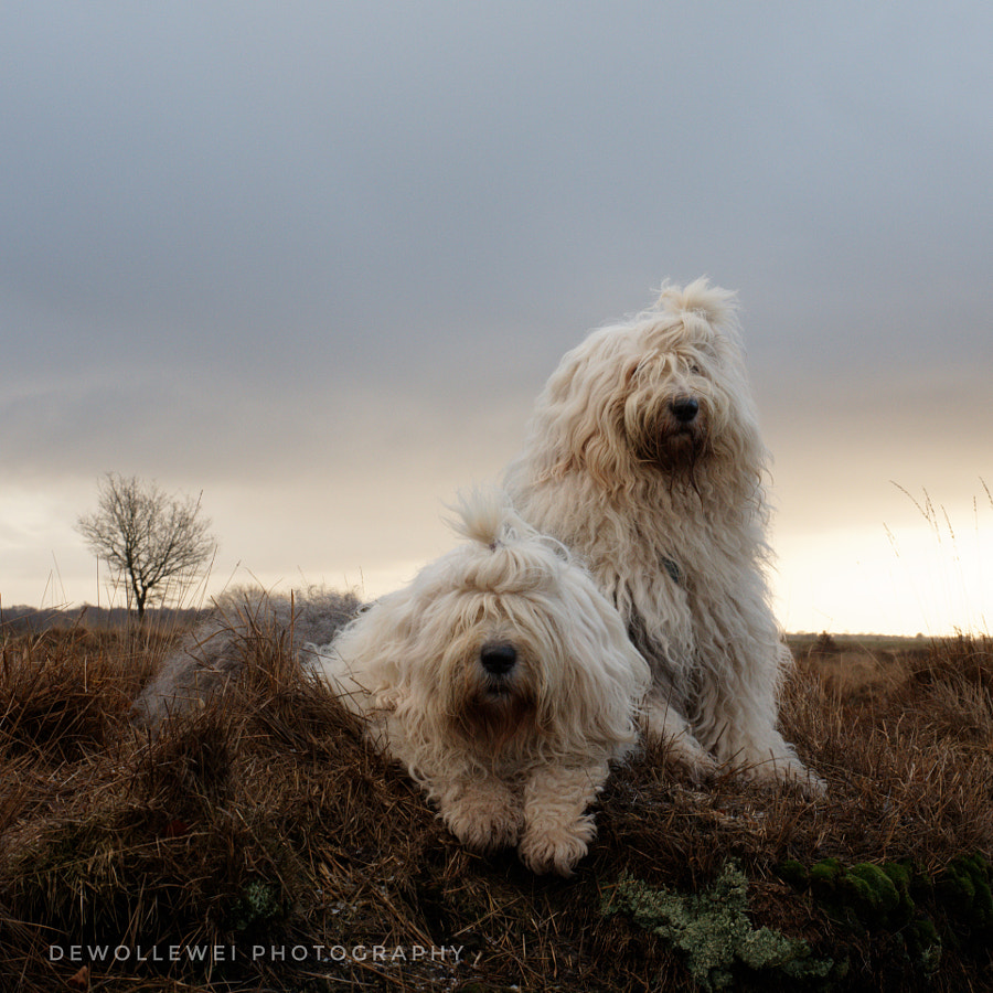 Sophie and Sarah  by Cees Bol on 500px.com