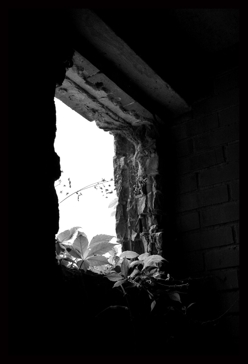 Photograph Kuhn Memorial Basement Window by Stacy Baugher on 500px