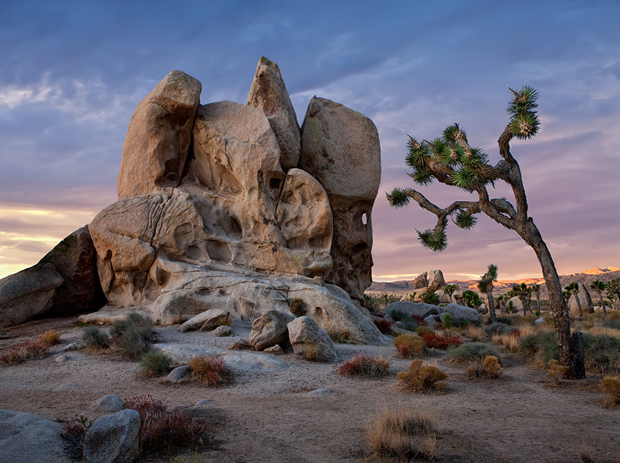 Photograph Joshua Tree NP by Cecil  Whitt on 500px