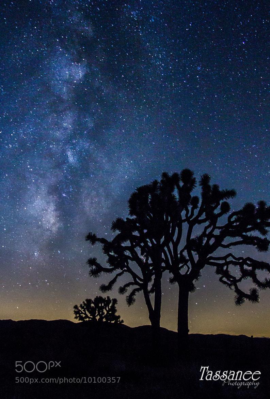 Photograph Joshua Tree by Tassanee Angiolillo on 500px