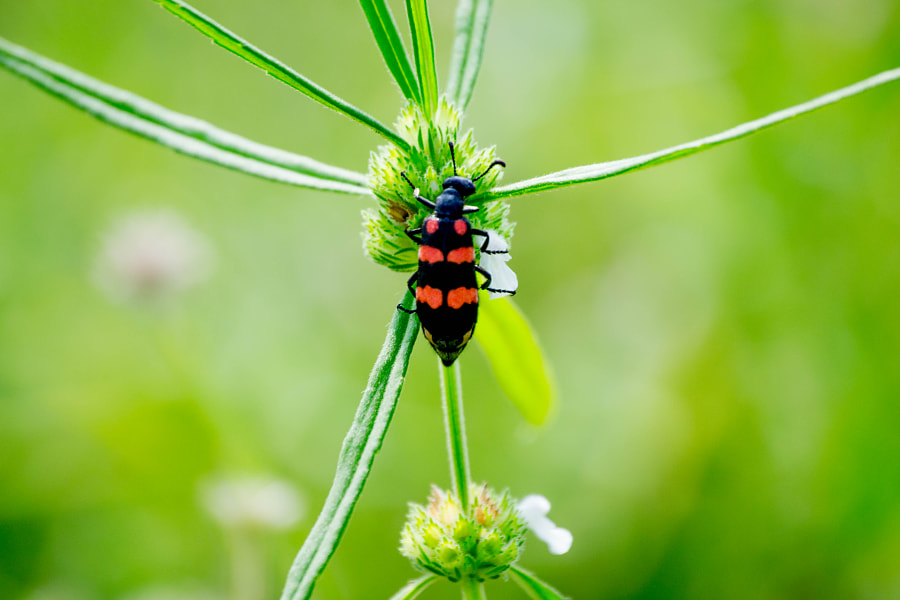 Photograph I am not a Lady Bug :P by Gideon James Draviam on 500px