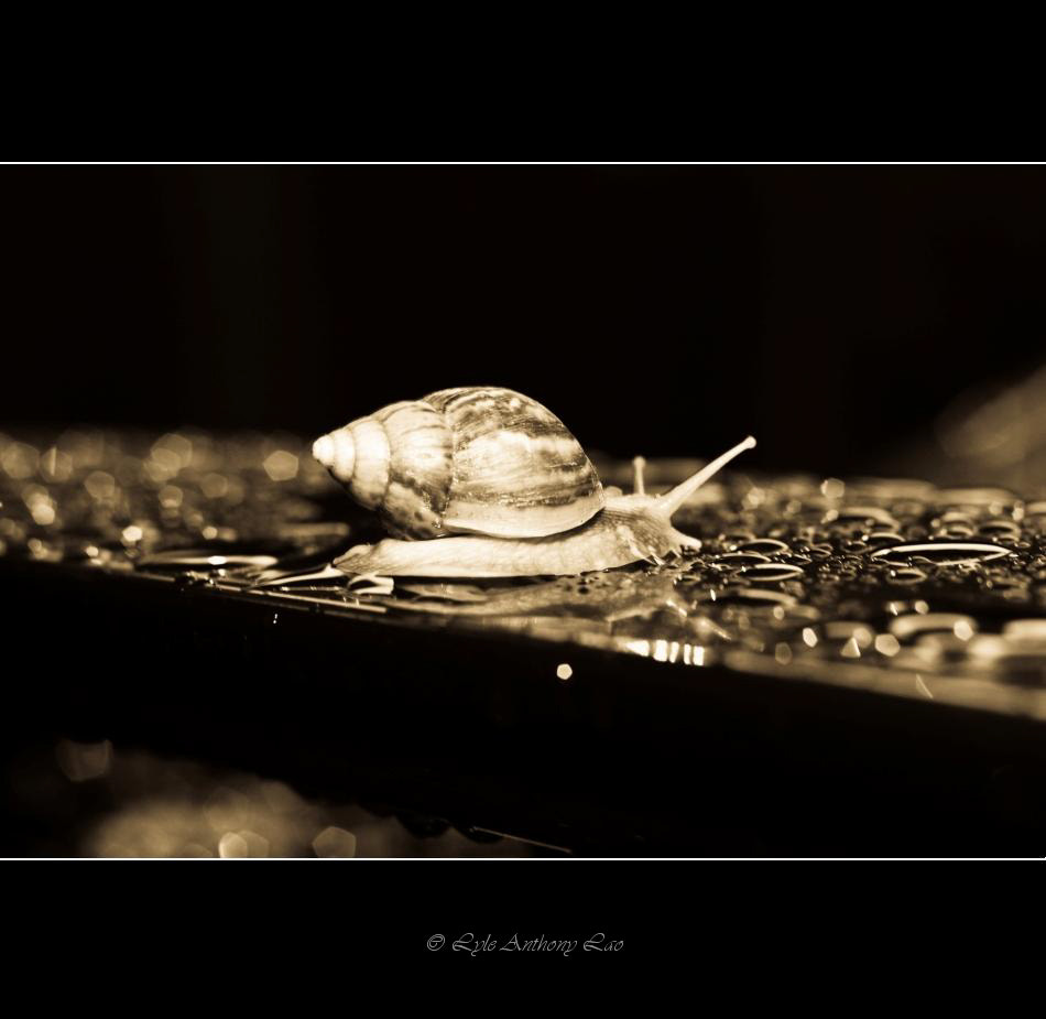 Photograph Helix aspersa by Lyle Anthony Lao on 500px