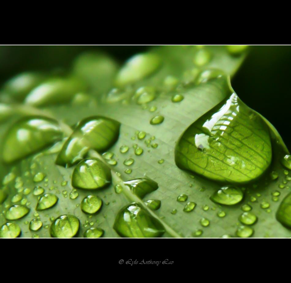 Photograph Water drops by Lyle Anthony Lao on 500px