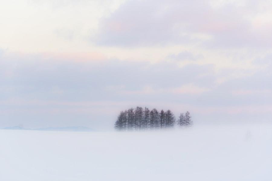 カラマツ林 by Kousuke Toyose on 500px.com