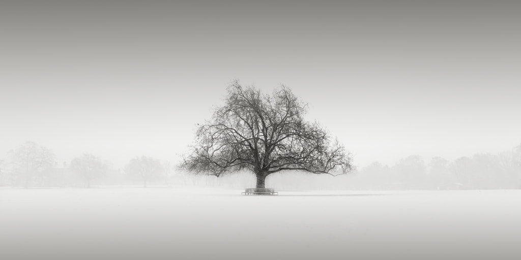 Photograph The Rye Tree by Noel  Clegg on 500px