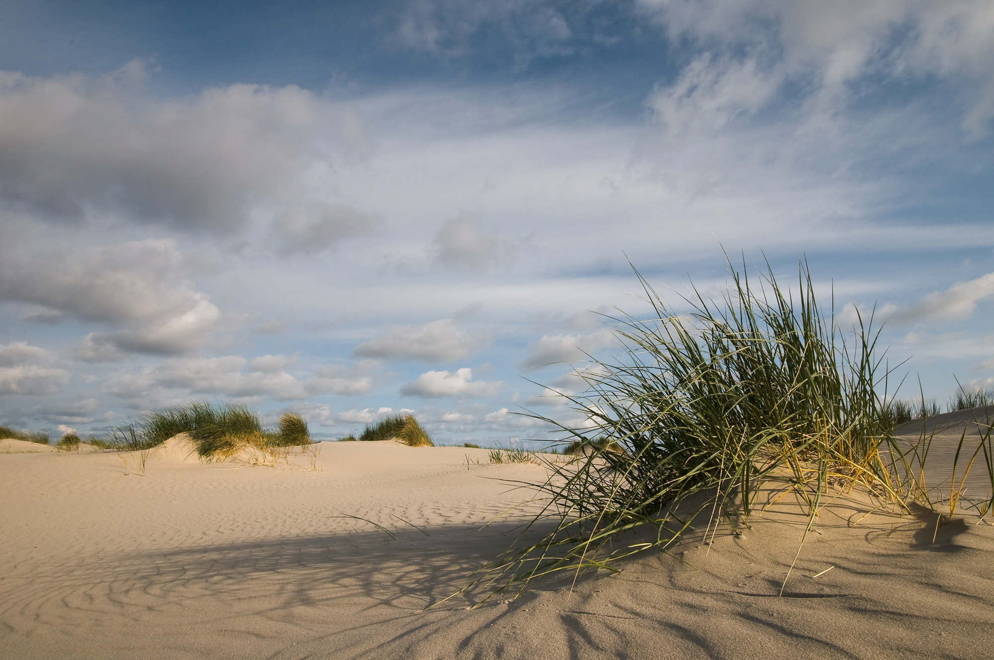 Photograph Grassy Beach by Daniel Bosma on 500px
