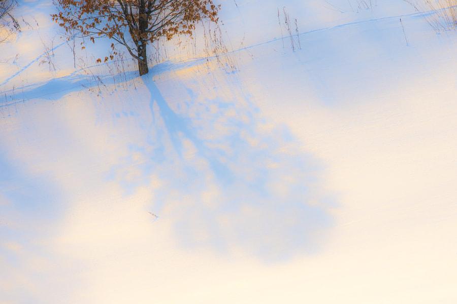 光と影 by Kousuke Toyose on 500px.com