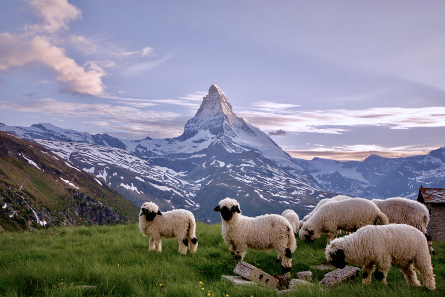 Matterhorn by Marat  Magomedov on 500px.com