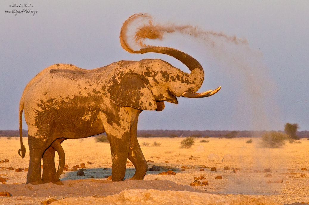 Photograph Dust Bath by Hendri Venter on 500px