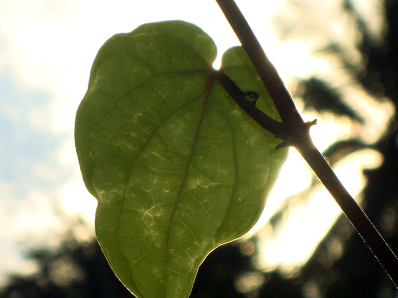 Photograph leaf by sajan Laks on 500px