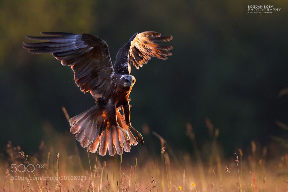 Photograph Sunset Hovering by Bogdan Boev on 500px