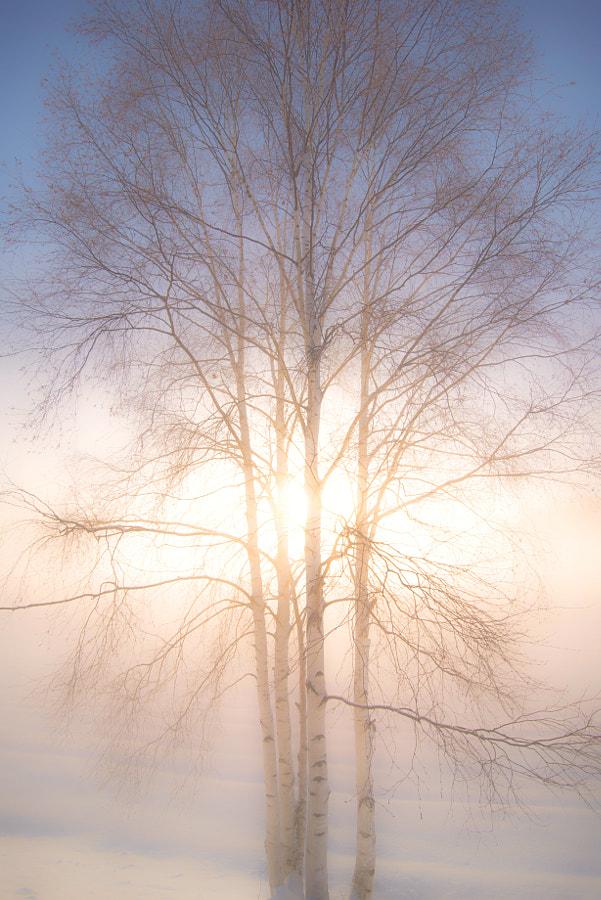 朝の光 by Kousuke Toyose on 500px.com