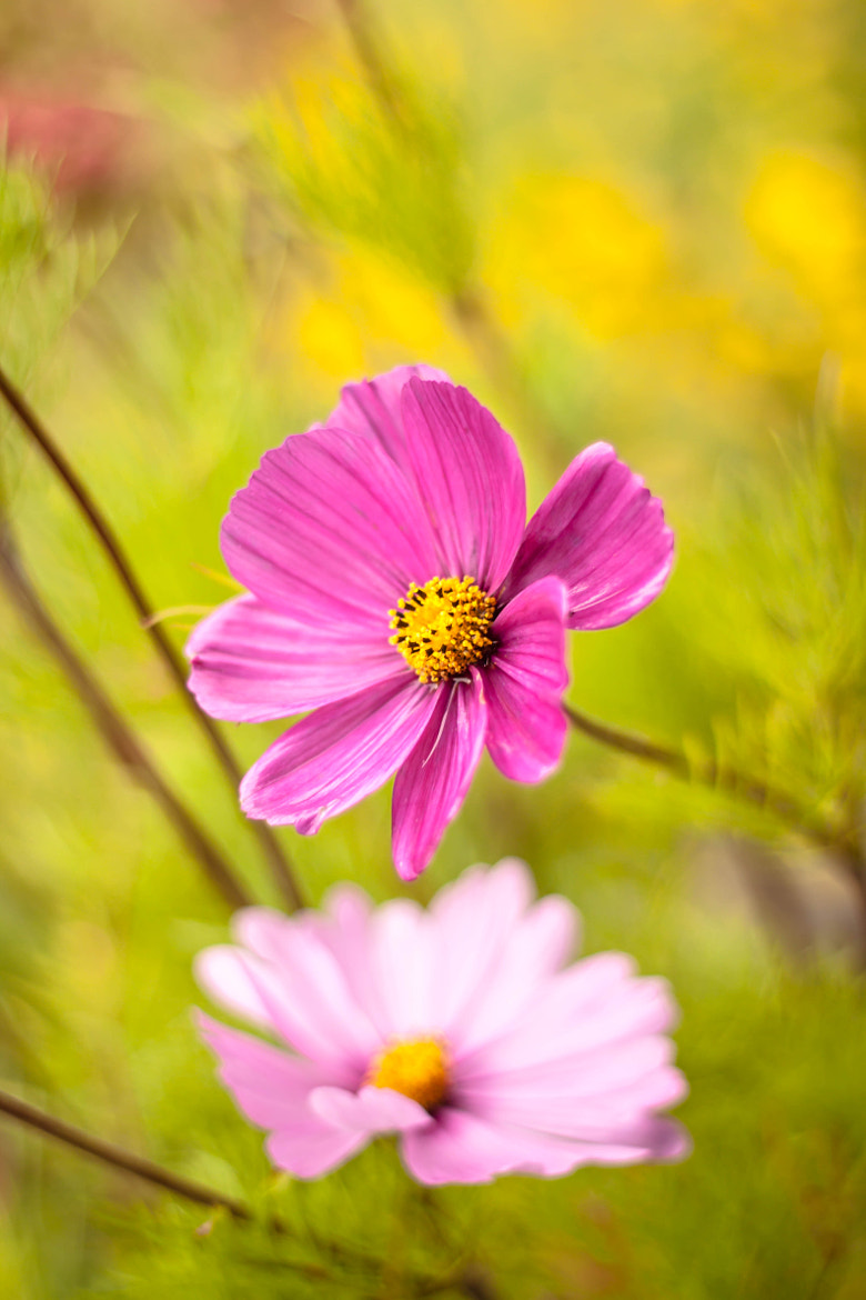 Photograph Pretty in Pink by Libby Hall on 500px