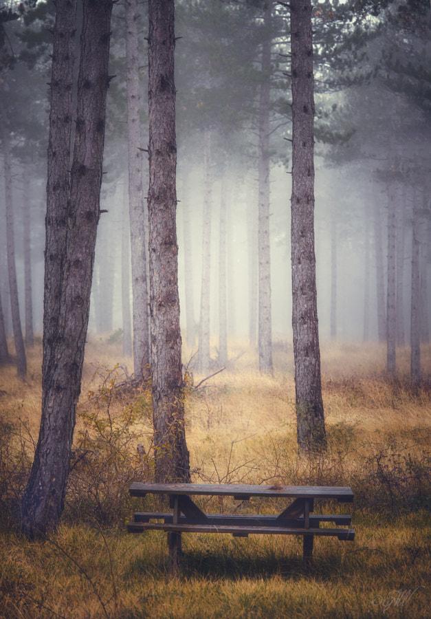 Take a seat by Elizabeth Arosa on 500px.com