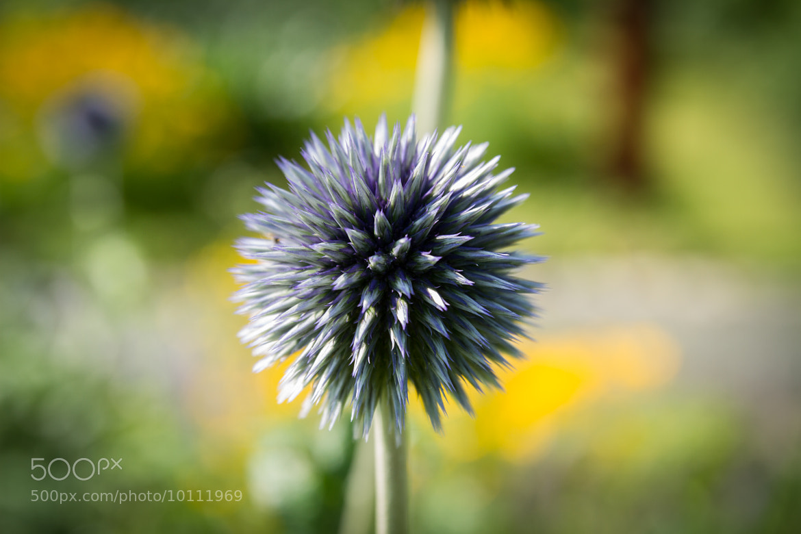 Photograph soft spike by Andreas Levi on 500px