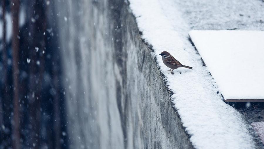 看雪 by Walker Chen  on 500px.com