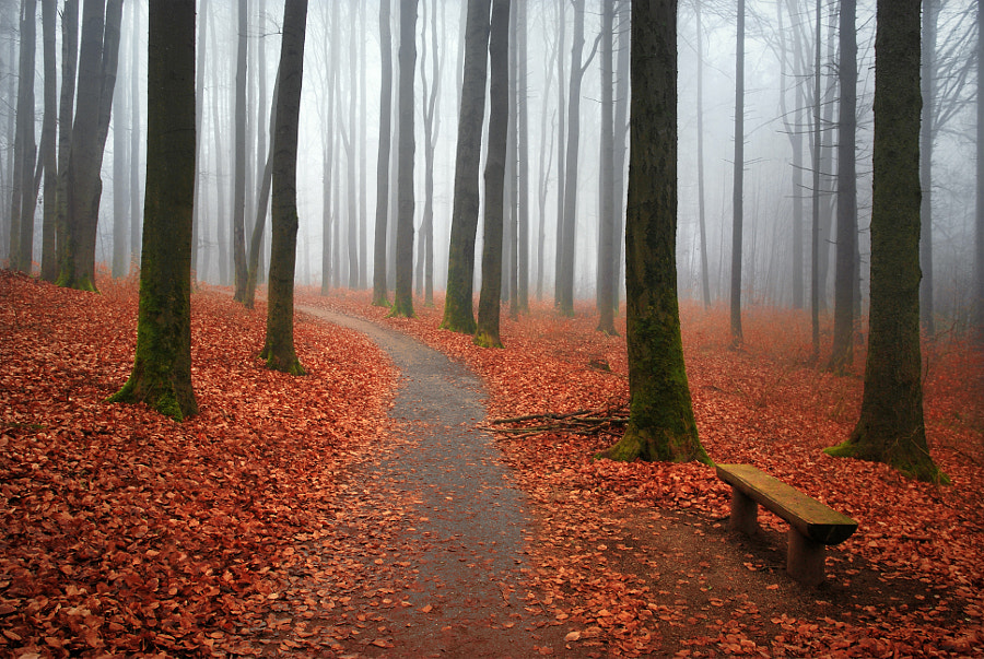 In late autumn by Karel Hofman on 500px.com