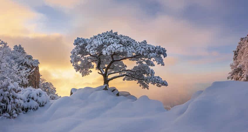 Cold loner by jae youn Ryu