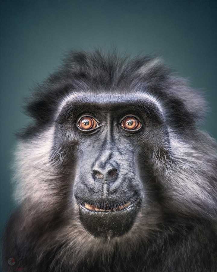 Photograph Animal Personality: Moor Macaque Jaya by Manuela Kulpa on 500px