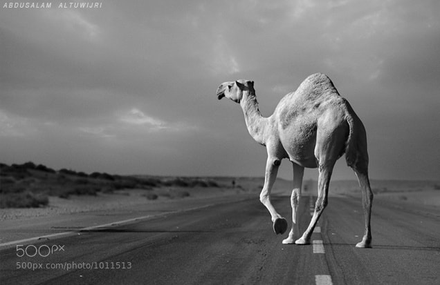 Photograph CROSSING by Abdusalam AlTuwijri on 500px