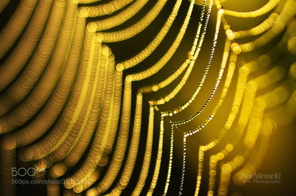 Photograph Golden Pearls by Joni Niemelä on 500px