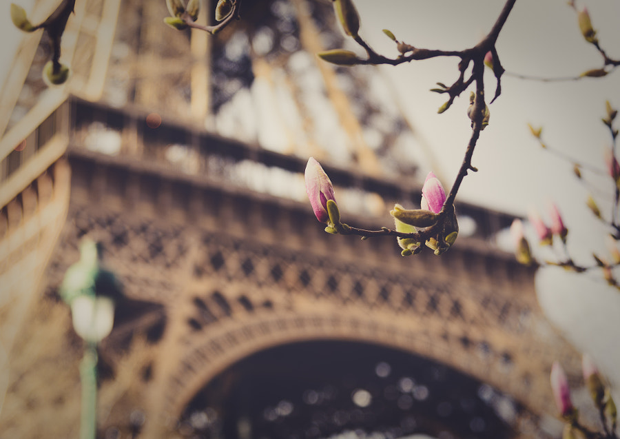 Flower bud and Eiffel tower in soft background by Julien Boé on 500px.com