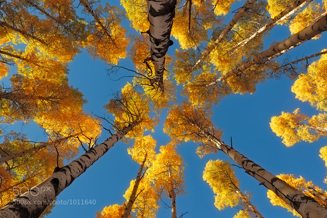 Photograph Aspen Vortex... by Jeremy Cram on 500px