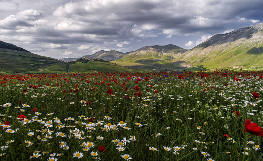 Castelluccio by Nicola Di Nola  on 500px.com
