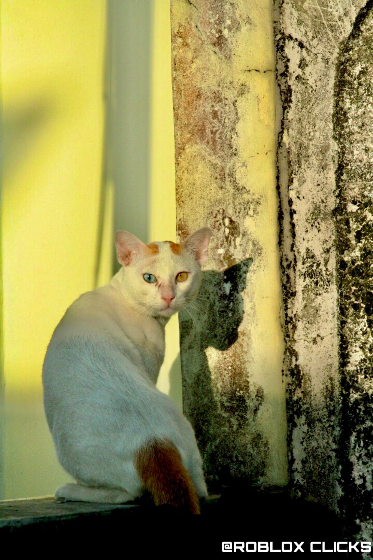 Look at the cat eyes ✨❤️