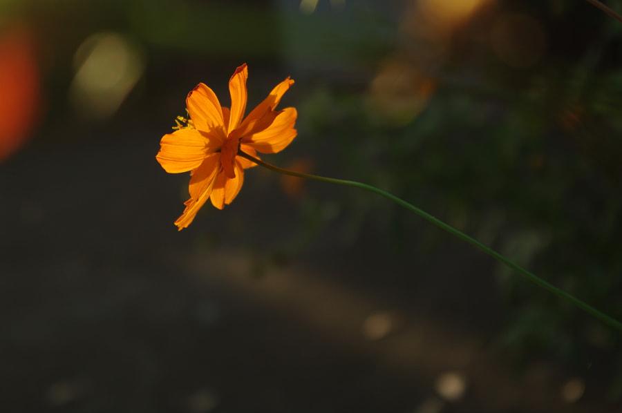 Bright by wisteria2 kozo on 500px.com