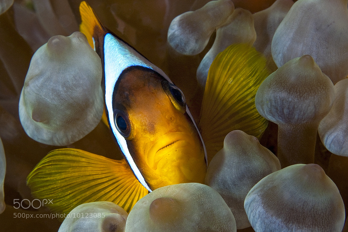 Photograph Nemo Portrait by Marcello Di Francesco on 500px