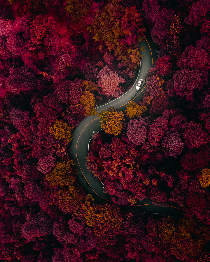 Curvy Road in Dark Forest by Vitaly Tyuk on 500px.com