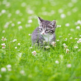 Kitten by Børge Svingen (bsvingen)) on 500px.com