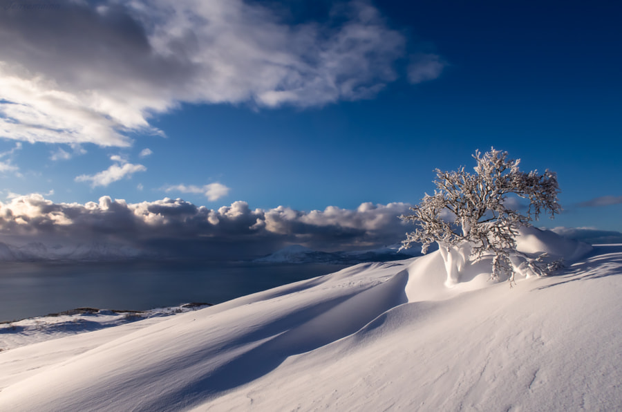 Ice-covered little tree by Jens Hansen on 500px.com