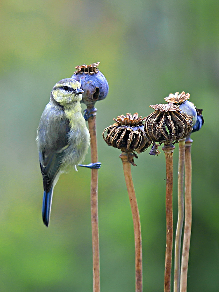 Photograph blue feed by SuSanne MarX on 500px
