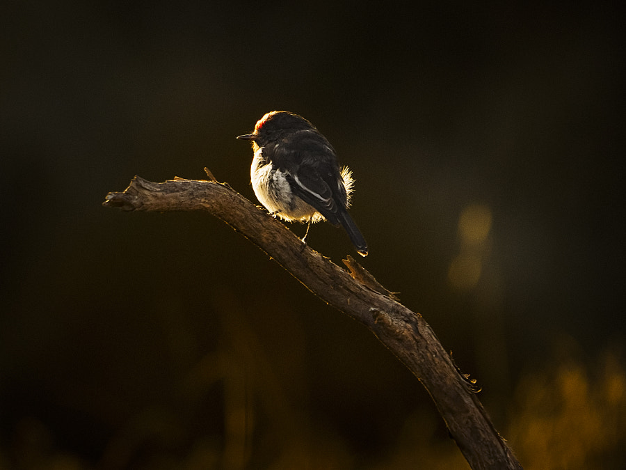 Red-cap Dawn by Paul Amyes on 500px.com